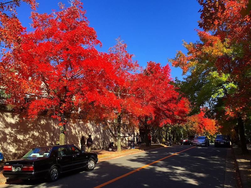 紅葉が美しい住宅街